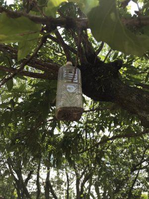 スズメバチ捕獲のための罠です。